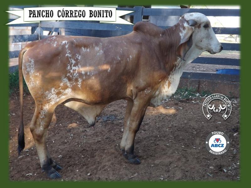 Pancho Córrego Bonito - DOUG 67