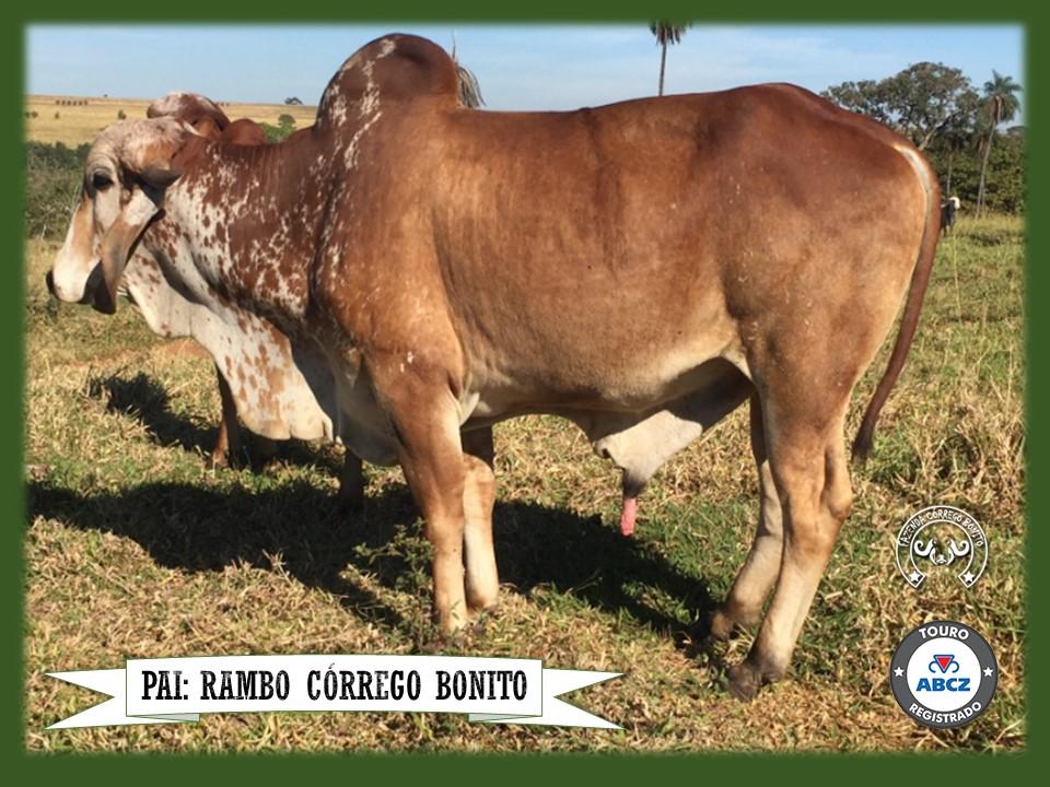 Conhaque Córrego Bonito - DOUG 223