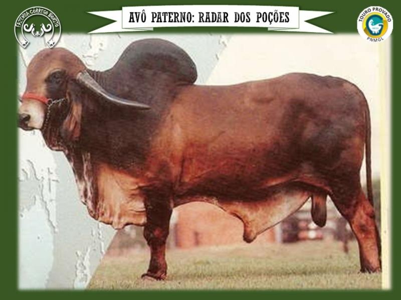 Mutum Córrego Bonito - DOUG 99